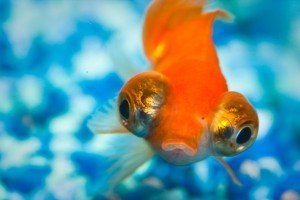 5 Fishy Ways to Think about poker