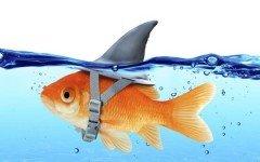 Fake Fish420 240x150